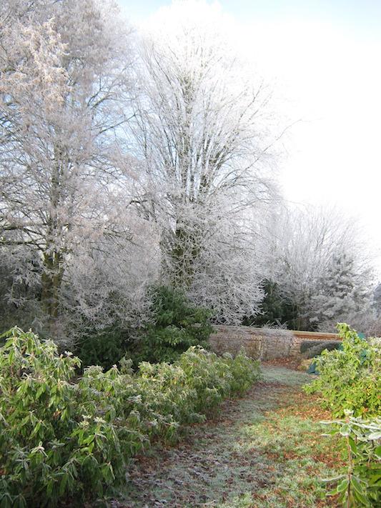 jardin givré